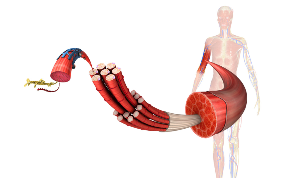 myofascial release treatment therapy
